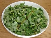 Tavuklu Semizotu Salatası