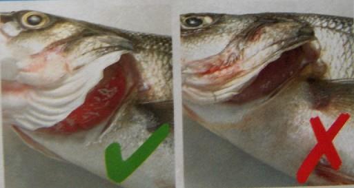 <b>Taze Balık Nasıl Anlaşılır</b>?